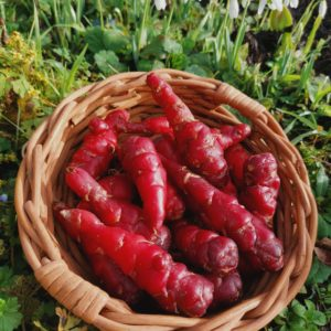 Basket of Tubers